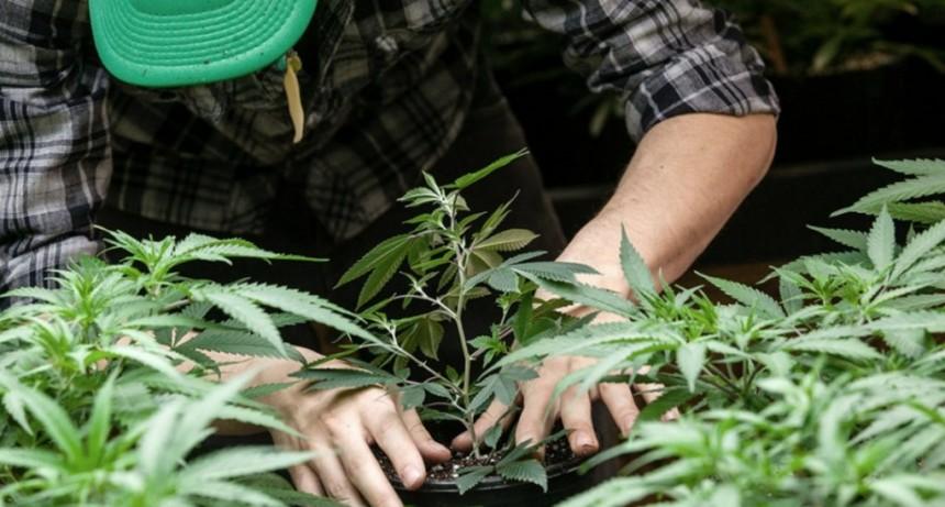 La ANMAT prohibió la venta y el uso de una crema curativa de cannabis