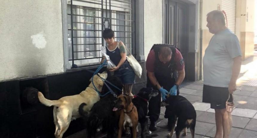 Un paseador sufrió muerte súbita y los perros quedaron abandonados en la calle