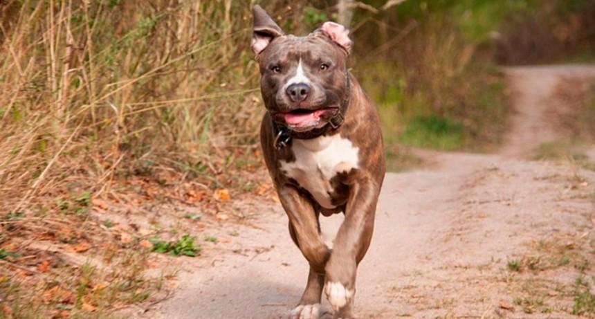 Cuatro perros atacaron a un nene en Brasil y lo mataron