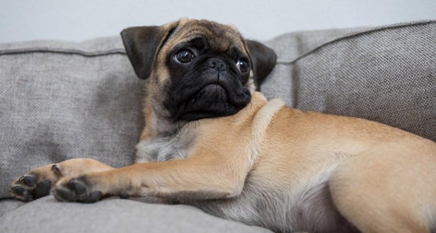 Alemania: Incautan y venden por eBay el perro de una familia que no pagó impuestos