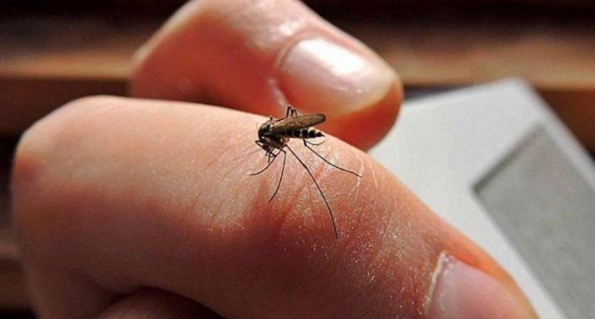 Jujuy: ahora son 61 los casos de dengue confirmados