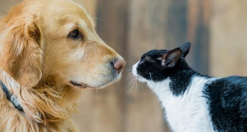 ¿Por qué el 29 de abril es el Día del Animal en Argentina?
