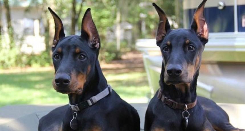 Dos detenidos tras envenenar a perros y robar una casa