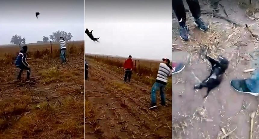Crueldad sin límites: se grabaron jugando al béisbol con un perro hasta matarlo