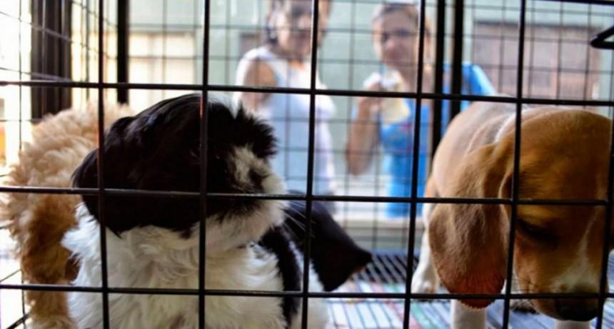 Quieren prohibir la venta de animales domésticos y su exhibición en comercios en la Ciudad