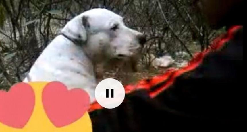Pibe ató a perra a un árbol, la violó y lo subió a las redes
